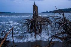 "Swedish photographer  Daniel Berehulak....""Pinetrees after Tsunami"" Japan....world press photo, third prize 2013"