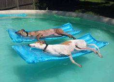 プールで遊び倒した後の犬01
