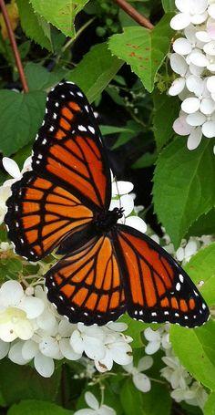 ◑≈◑≈◑≈◑ Butterfly ◑≈◑≈◑≈◑                                                       …