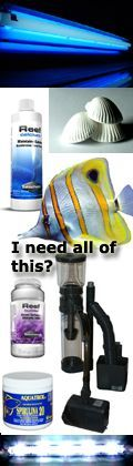 Saltwater, Marine Aquarium Start up Basics, Care, Advanced Resources