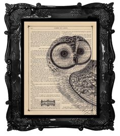 Hey, I found this really awesome Etsy listing at http://www.etsy.com/listing/62869645/antique-owl-print-owl-art-print-owl