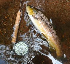 Great time fishing for Wisconsin's wild brown trout