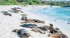 travel vacations galapagos cruise tour