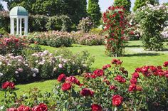 How to Design an English Rose Garden