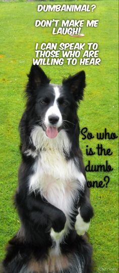 """""""Dumb Animal...Don't make me laugh!..I can speak to those who are willing to hear....So who is the Dumb one?..."""""""
