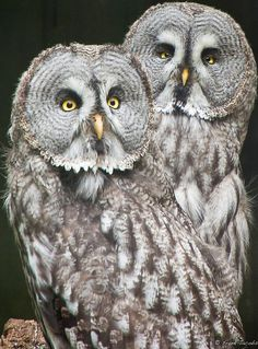 Owls, will have to find their type!