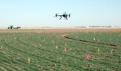 Scientist utilizes drone to detect wheat disease progression - Technology Org