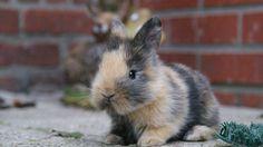 Cutest Animal 5: bunnies