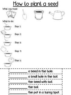 Procedure Writing Template : Differentiated : How to plant a seed - Modern Sequencing Worksheets, Reading Comprehension Worksheets, Writing Worksheets, Writing Activities, Story Sequencing, 1st Grade Writing, Kindergarten Writing, Kids Writing, Literacy
