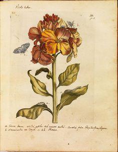 Más tamaños | Erucarum ortus - Maria Sibylla Merian k | Flickr: ¡Intercambio de fotos!