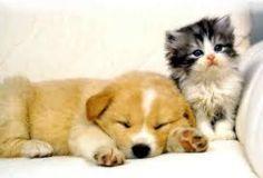 hondje en kitten