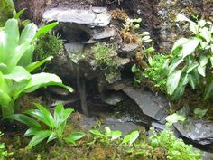 Making a waterfall in your vivarium or terrarium is an easy way to add visual appeal. Your pet will love the increased humidity from a waterfall, and the water movement will facilitate beneficial b...