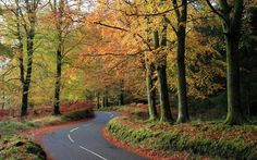 Cumbrian forest road