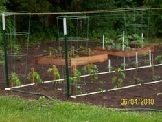 """These are tomato plants from seeds. I started these in the 96 cell containers they are about 12"""" x 24""""  with one flourescant grow light.12"""" x 48"""" fixture with 2 bulbs. You can get 2 containers under one fixture. Potentially 192 plants.   www.latticebracket.com"""