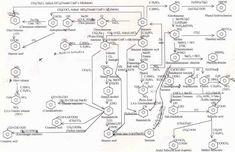 IB Biology/Chemistry: IB Chemistry on Reaction Pathway