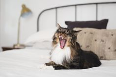 How To Make a Small Apartment More Fun for Your Cat
