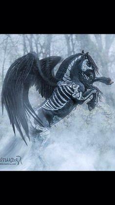 Black Pegasus...  Horse costume ...