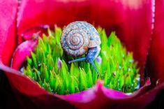 Le monde merveilleux des escargots capturé en photos | Buzzly