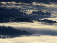 Nebel liegt unterhalb des Bergs Pfänder im Bregenzer Wald. Foto: Felix Kaestle