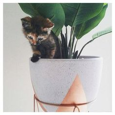 KMART - Copper plant stand with a cute furry friend