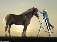 Tallest Living Horse Radar, a Belgian draught horse from Mount Pleasant , Texas is officially the Worlds Tallest Living Horse. [via worldsmostunique]  Belgian Draft horse gelding  Born in 1998 in Iowa , USA 19 Hands 3-1/2 inches tall (6 7-1/2)  Weigh