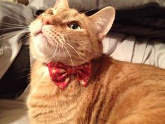 Cat Bow Tie Collar For Christmas by parksidedesignstudio on Etsy