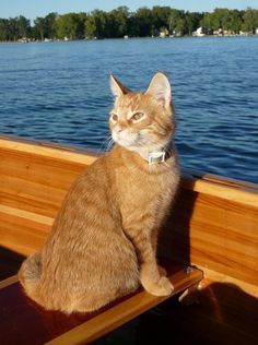 Kitty on the Boat by lirena Cute Cats And Kittens, I Love Cats, Crazy Cats, Kittens Cutest, Ragdoll Kittens, Tabby Cats, Funny Kittens, Bengal Cats, Kitty Cats