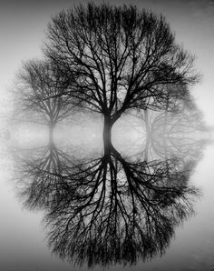 Ansel Adams, Tree Reflection