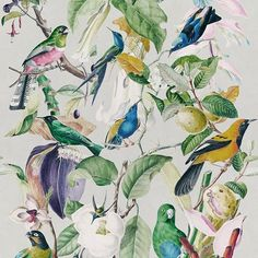 Tropical Birds by Mind the Gap - White / Multi - Mural : Wallpaper Direct Wallpaper Direct, Modern Wallpaper, Of Wallpaper, Designer Wallpaper, Pattern Wallpaper, Amazing Wallpaper, Forest Wallpaper, Luxury Wallpaper, Wallpaper Designs