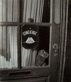 "Paris 1946 "" La concierge est dans l'escalier "" ! Photo Robert Doisneau"