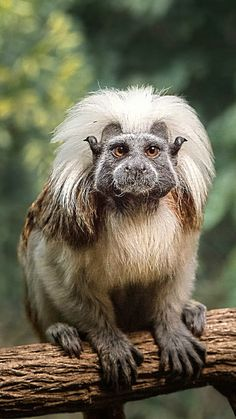 Interesting Animals, Unusual Animals, Rare Animals, Animals Beautiful, Animals And Pets, Wild Animals Pictures, Cute Animal Pictures, Primates, Water For Elephants