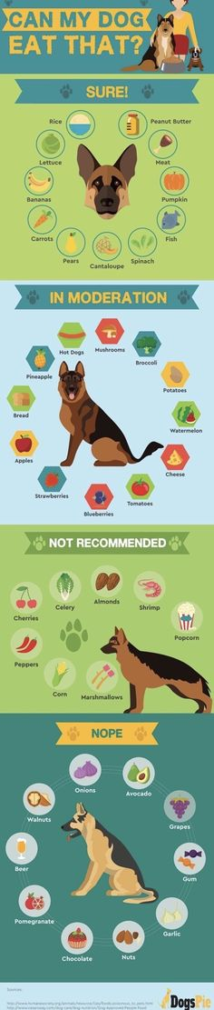 Safe Human Food For Your Dogs Info Graphic - Tap the pin for the most adorable pawtastic fur baby apparel! You'll love the dog clothes and cat clothes! Everything you want to know about GSDs. Training, health and beauty recommendations. Funny videos and Dog Care Tips, Pet Care, Animals And Pets, Cute Animals, Yorkie, Chihuahua, Dog Health Tips, Pet Health, Dog Facts
