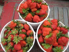Fulton Farms Strawberries - pick your own!