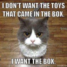 I Don't Want the Toys That Came in the Box... I Want the Box! #cats #catmemes