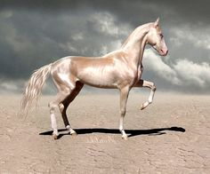 Akhal Teke a rare breed that is known for its metallic cost and speed. They can withstand extremely hot desert temperatures and can go for long periods without water.