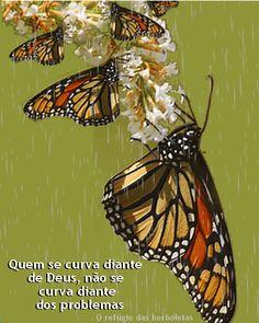 o refúgio das borboletas - Google+ Quem se curva diante de #Deus