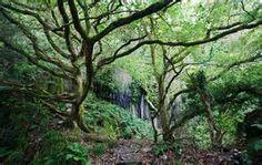 unusual trees - Bing Images