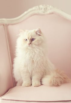 White kitty sitting Pretty in Pink