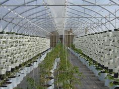 Hydroponic Greenhouse Operation