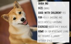 Shiba Inu | What Kind Of Dog Best Suits Your Lifestyle?