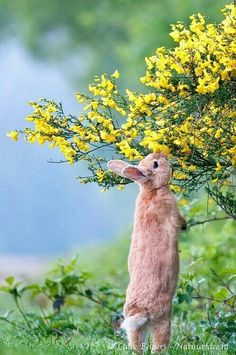 Rabbit in nature Beautiful Creatures, Animals Beautiful, Baby Animals, Cute Animals, Spring Animals, Morning Stretches, Mundo Animal, Cute Bunny, Bunny Pics