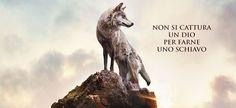 L'ultimo lupo: il lupo cattivo non esiste