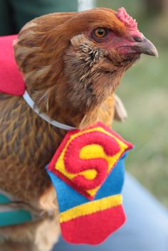 Tee-hee. Ba-Gawks: Chickens in tiny costumes: Halloween Fun; see also Chickens in tiny hats....