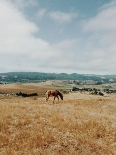 Bishop Peak. San Luis Obispo, California | Kevin Russ | VSCO Grid