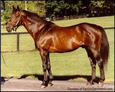 MR. PROSPECTOR (USA) B c 1970, Raise a Native - Gold Digger. 14 starts, 7 wins, 6 placings. A direct make descendant of thoroughbred foundation sire, Eclipse (GB), he was Leading Sire in North America in 1987 & 1988 and Leading Broodmare Sire 1997-2003 and 2005-2006. He died from colic 1 June 1999. He appears on both sides of the pedigree of California Chrome.