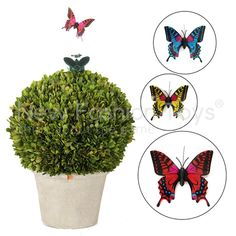 Solar Energy Butterfly DIY Educational Assembly Kit Kids Toy $9.29http://www.aliexpress.com/store/product/Solar-Energy-Butterfly-DIY-font-b-Educational-b-font-Assembly-Kit-Kids-Toy/1336098_2005655374.html+