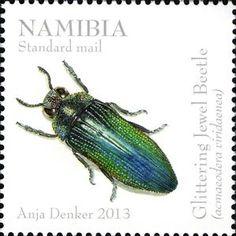 Glittering Jewel Beetle (Acmaeodera viridaenea)