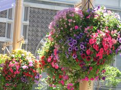 Hanging flower baskets all over SF in the summer