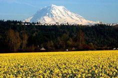 vintage daffodil parade images tacoma washington | Sumner, WA Real Estate | Northwest Washington Real Estate :: Priority ...