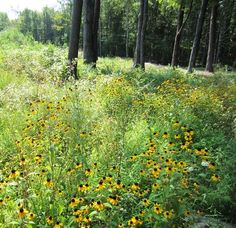 Native Meadows - Natural Landscaping and Landscape Design in the Catskills and Hudson Valley including Ulster County, Ellenville, New Paltz, Kingston, and Woodstock